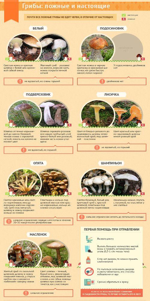 съедобные и ложные грибы с фото