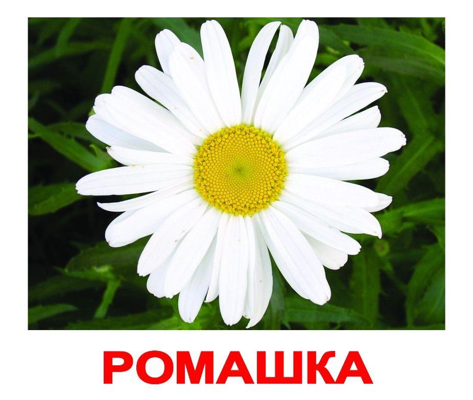 Картинки с изображением цветов одуванчик ромашка роза колокольчик ландыш, работа информатике открытка